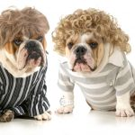 humanized dogs